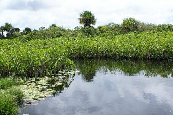 Marais en Guyane