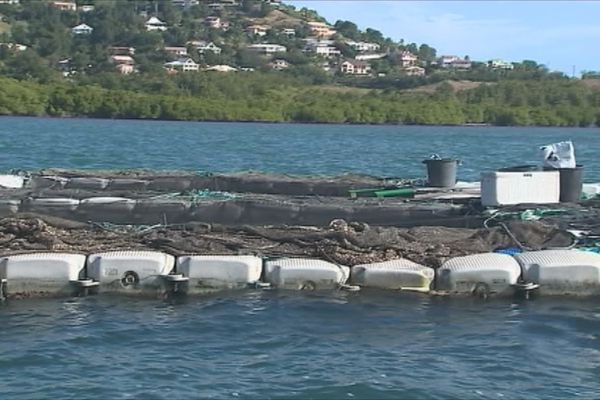 aquaculture (vols)