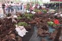 200 agriculteurs à la 6ème foire agricole de Taputapuatea