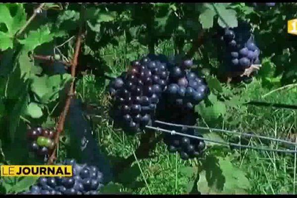 Cru 2017 Rangiroa : le pari viticole est récompensé à l'international