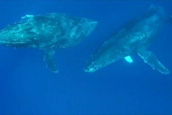 Petit rorqual, baleine de 10 mètres 281218