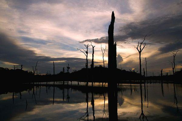 Histoire humaine de l'Amazonie article