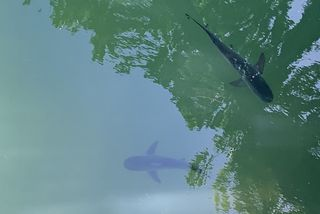 requins parc fayard
