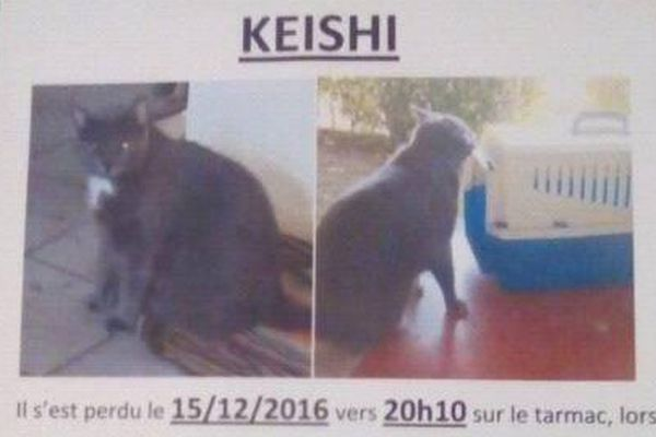 "Rendez-moi mon chat ""Keishi """