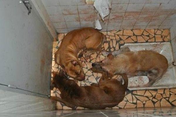 chiens torturés12