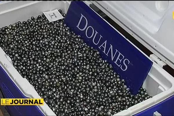 Les douanes saisissent 190 000 perles de contrebande