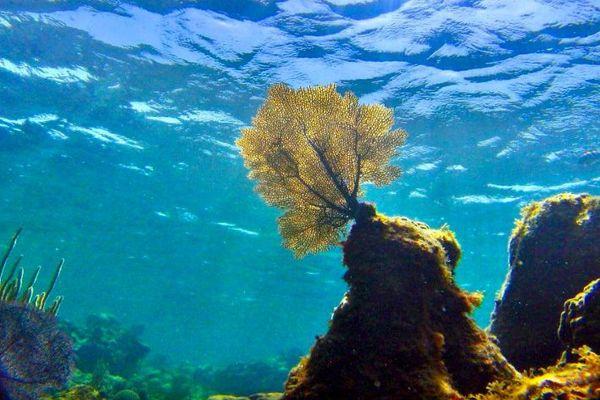 ''Under the pole'' à la découverte des coraux profonds de Polynésie