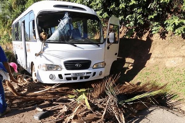 Hiva Oa: un cocotier emboutit un bus scolaire