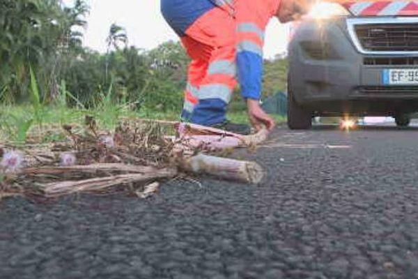 La DRR nettoie les cannes tombées sur la chaussée