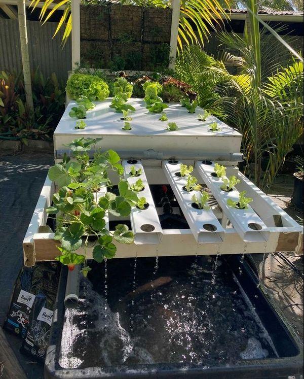 aquaponie horticulture