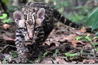 ONCA : le refuge des animaux sauvages