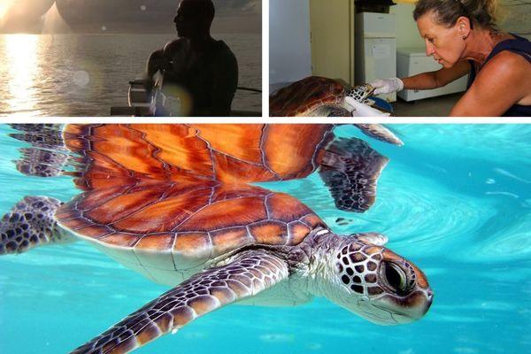 Une vidéo pour sensibiliser à la sauvegarde des tortues marines