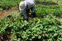Les agriculteurs appellent les candidats à la CTM à se prononcer en faveur d'une réforme foncière