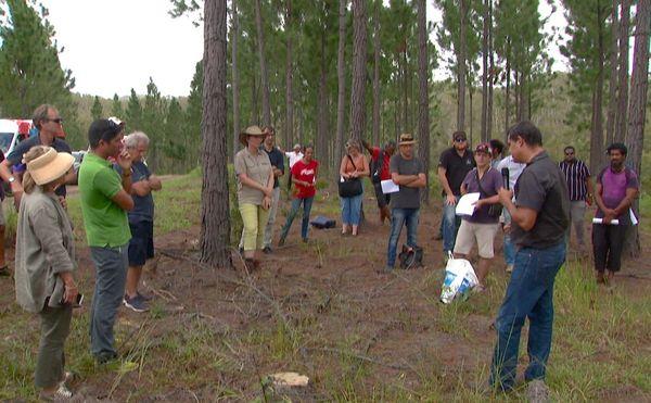 Visite de parcelle de pinus, atelier agro-foresterie de protège, mars 2020