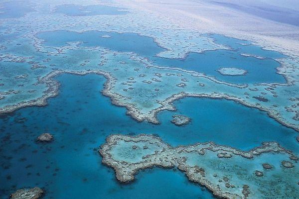 Grande barrière de corail. Australie