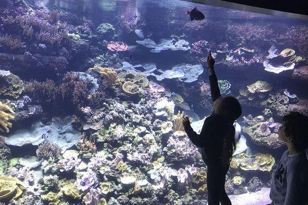 La France et le Pacifique aquarium de Paris