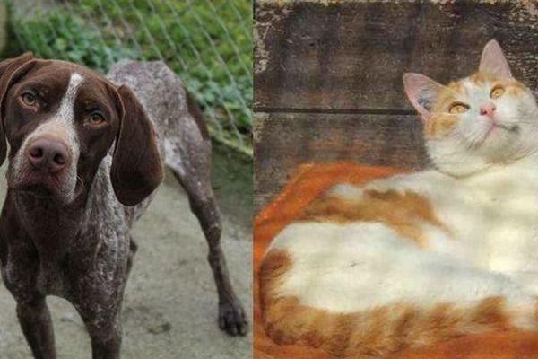 des chiens et des chats