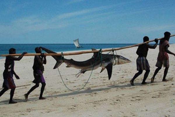 Pêche des requins à Mada