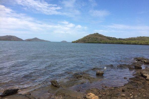 Après la pollution de la mangrove au pic aux Morts, février 2020, littoral de Dumbéa-sur-mer