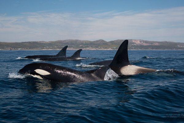 orques saint-pierre juin 2019 joel detcheverry