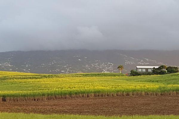 champs de cannes à sucre