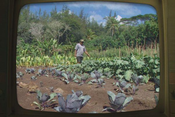 agriculture Mangareva fenua d'antan