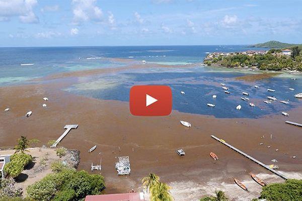 Algues sargasses (vidéo)