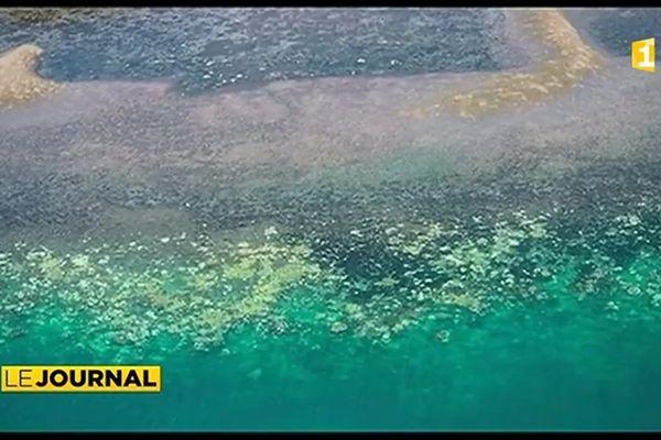 Les récifs coralliens calédoniens vont mieux