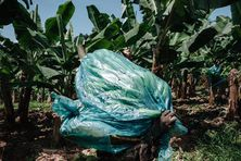Benoît Durand a réalisé des portraits de travailleurs des bananeraies, chez eux ou dans les champs où ils ont été exposés au chlordécone.
