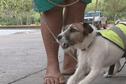 Environnement : des chiens anti-rats pour protéger les Marquises
