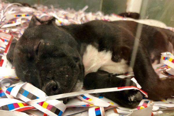 interdiction de vente de chiens et chats dans les animaleries en 2024