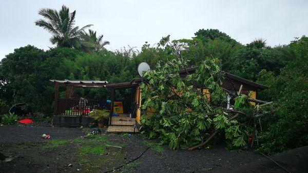 Fakir arbre couché près maison