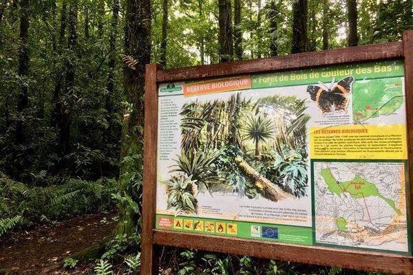 réserve biologique Saint-Philippe forêt bois de couleurs de basse vallée 310820