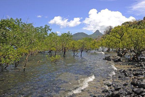 Alerte sur le déclin des mangroves de Mayotte