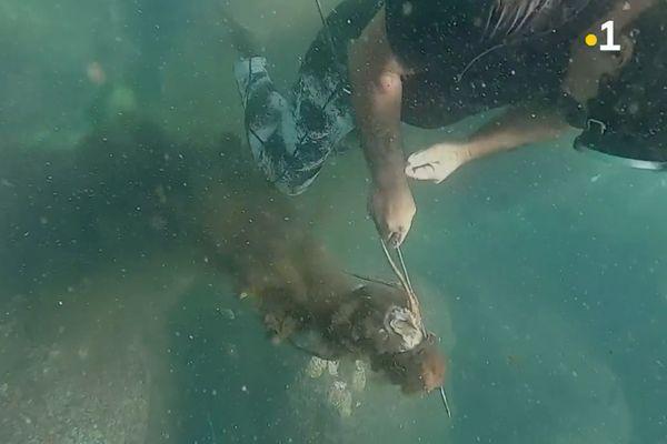 Temo, pêcheur de poulpes