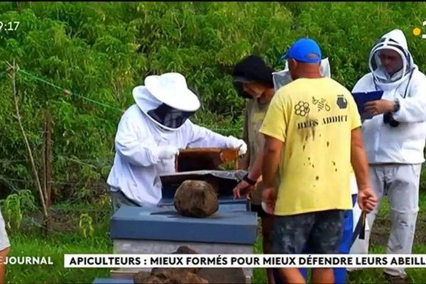 Les ruches de Tahaa passées à la loupe