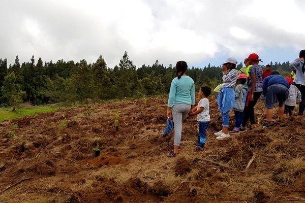 plantation d'arbres mellifères hauts Trois-Bassins ONF 031219