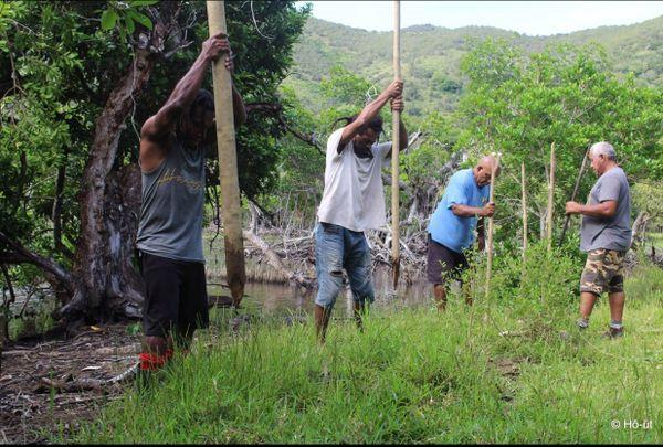 restauration barrière mangrove touho
