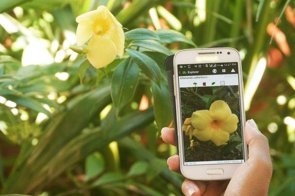 Application reconnaissance végétale CIRAD