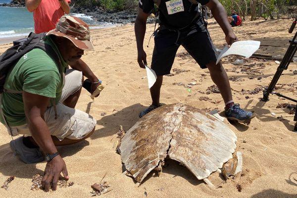 plage M'tsoumbatsou carcasse de tortue