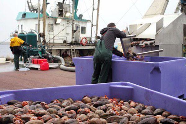 Plongée dans l'industrie du concombre de mer