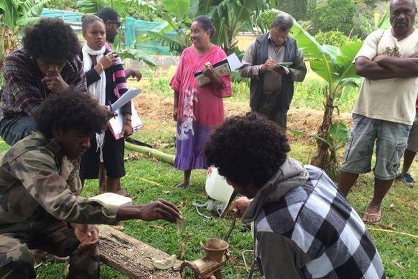 papayer pesticide bio