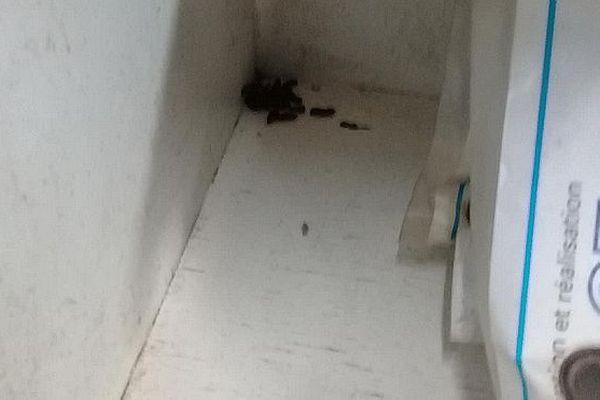 Crottes de rats