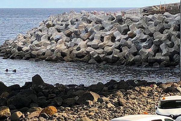 Plongeurs route du littoral, baleineau oct 2018