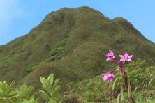Vue du sommet de la montagne Pelée.
