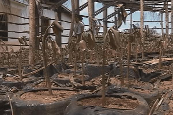 incendie plans paletuviers