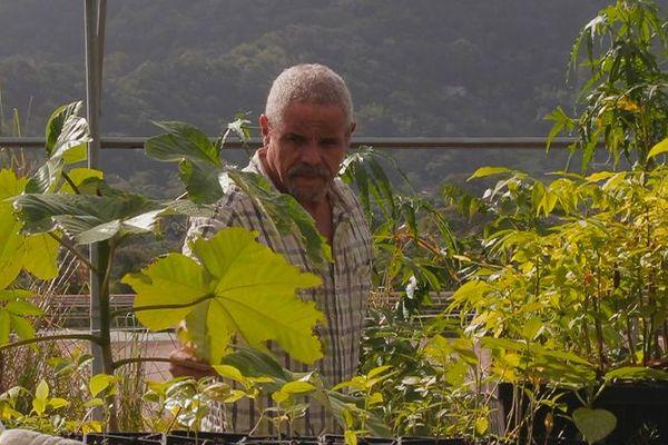 Martinique, l'art des jardins