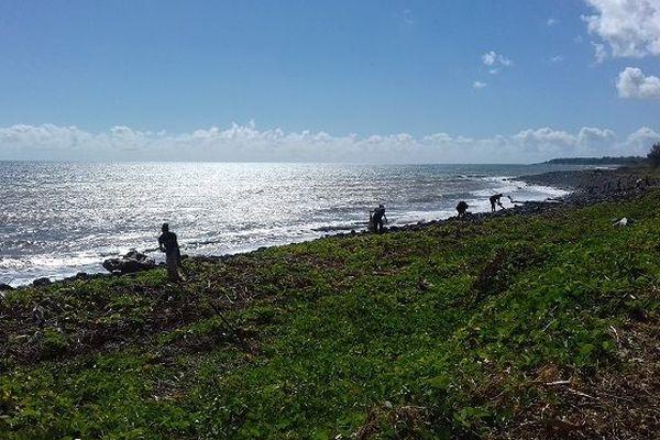 Des bénévoles ramassent des déchets sur le front de mer de St-Denis lors du World CleanUp Day.