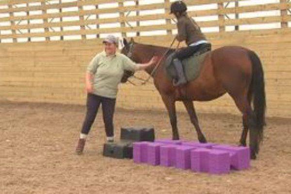 Au Club d'équitation de Saint-Pierre, des jeux équestres proposés aux cavaliers