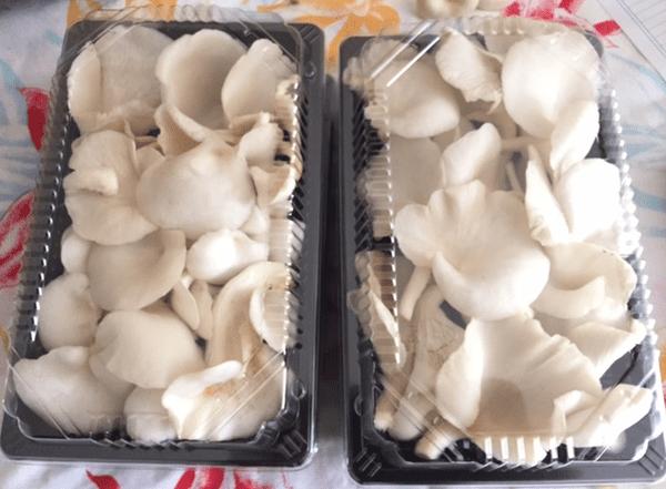 A Mahaena, une production de champignons...hallucinante !